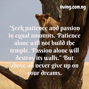 """Seek patience and passion in equal amounts. Patience alone will not build the temple. Passion alone will destroy its walls."" But above all never give up on your dreams."