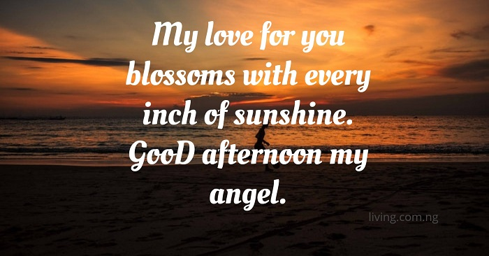 My Love For Blossoms With Every Inch Of Sunshine Good Afternoon My