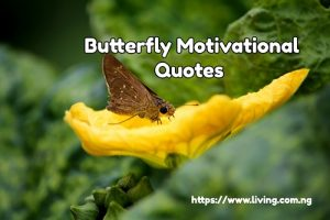 Butterfly Motivational Quotes