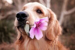 Cute Dog Captions For Instagram and Quotes